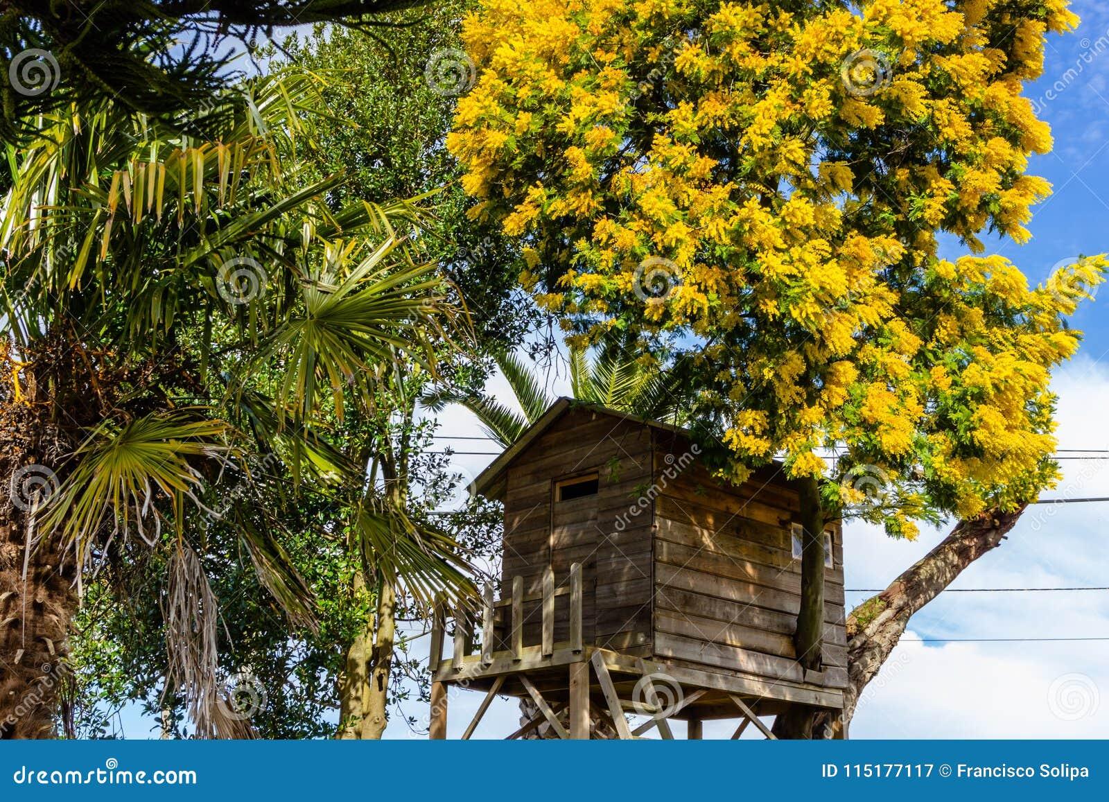Casa Sull Albero Per I Bambini Nel Giardino Immagine Stock