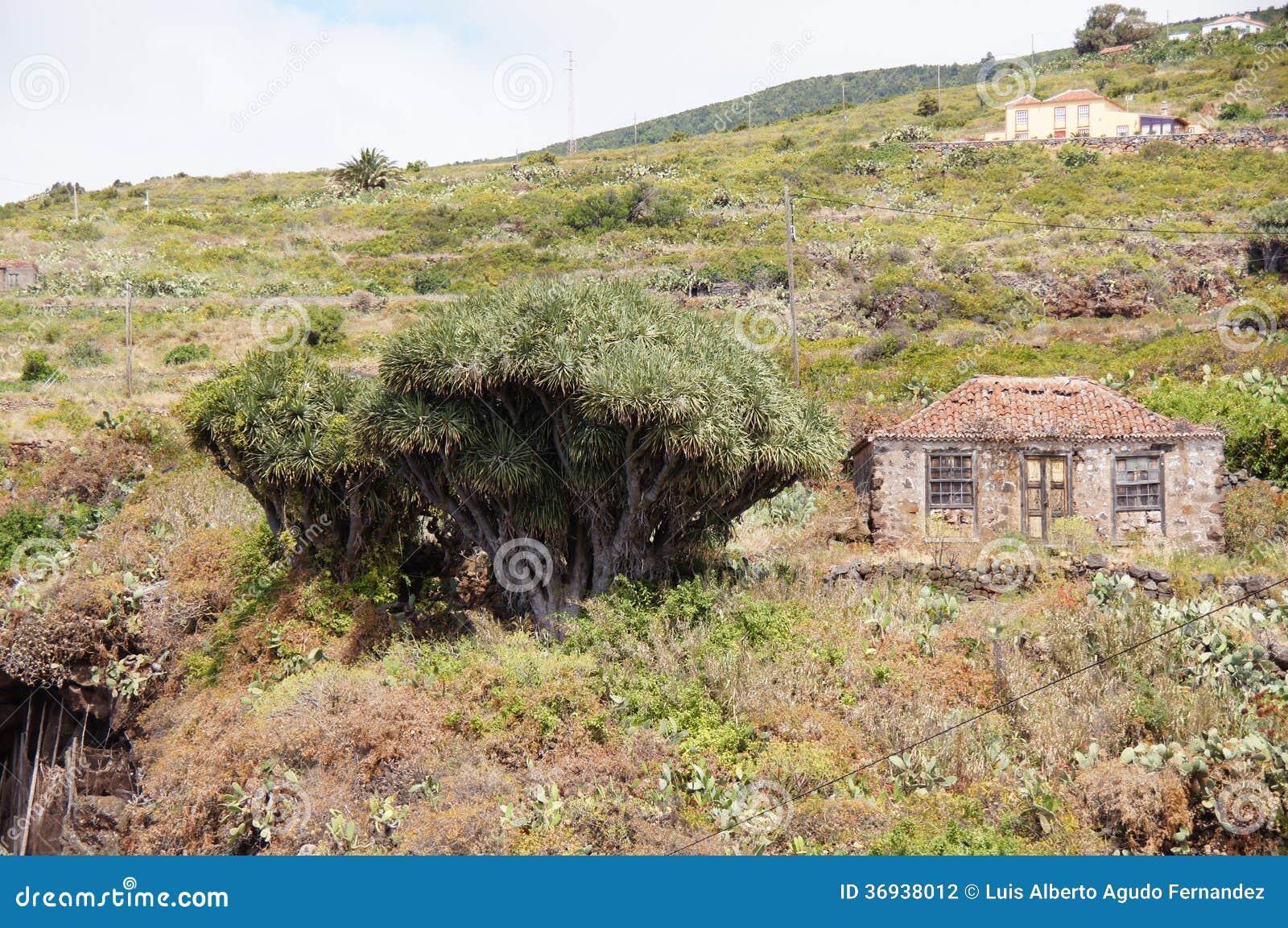 Casa típica con drago