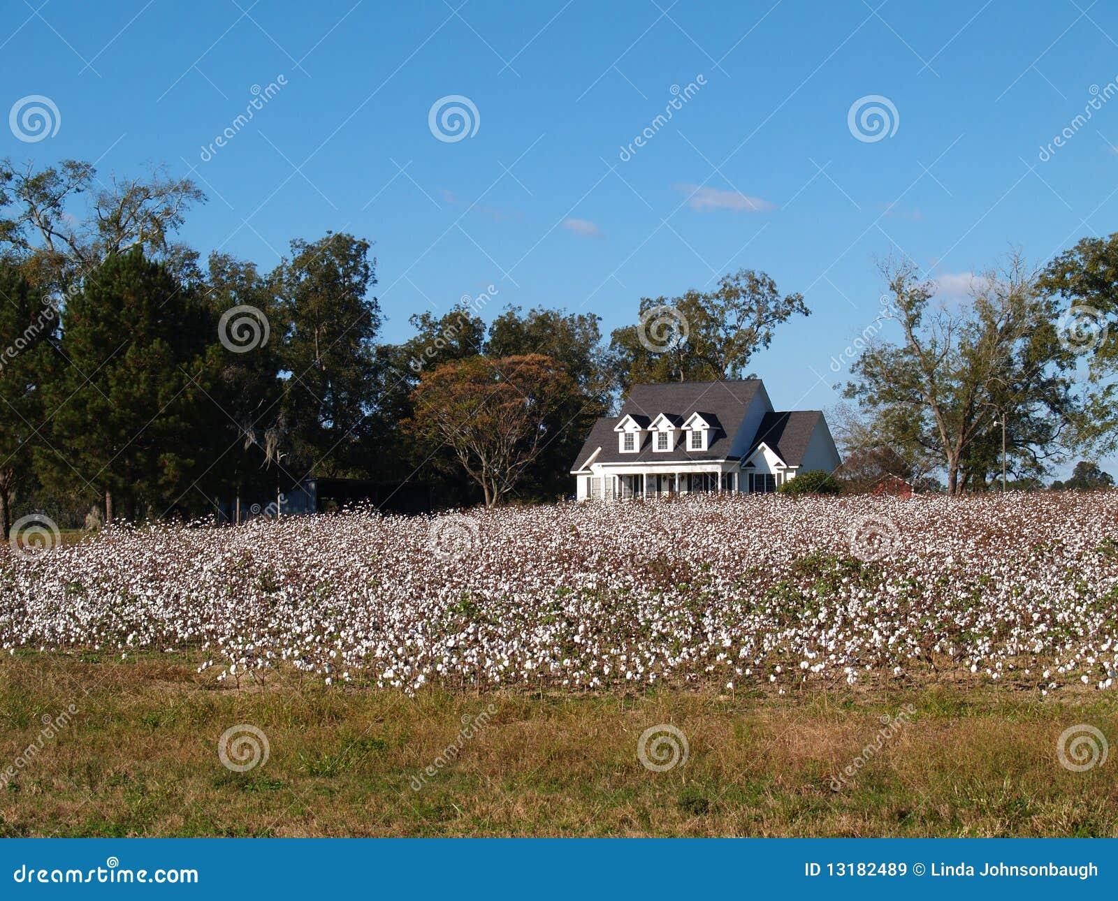 Casa velha da exploração agrícola atrás do campo do algodão em S. Geórgia