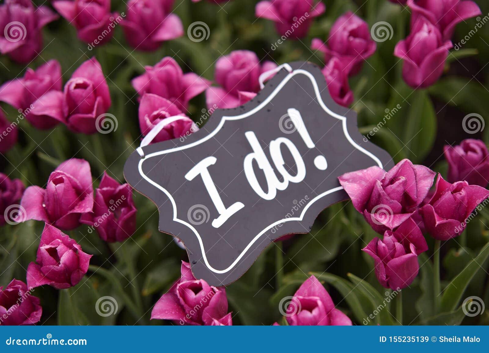 Casarse oferta con los tulipanes y los tulipanes rosados en campo holandés de la naturaleza