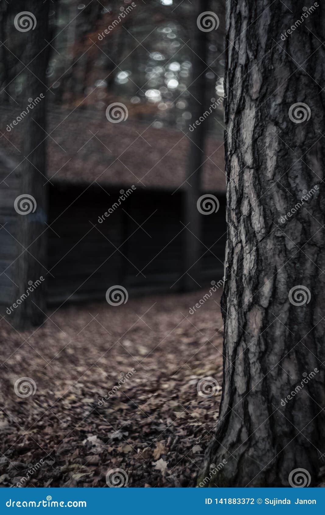 Casca da cena da árvore e do borrão