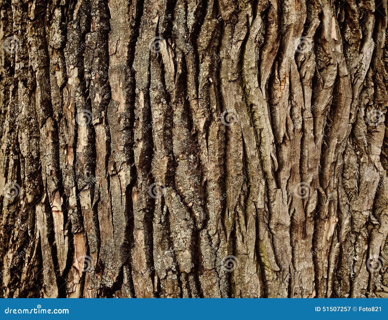 Casca de árvore