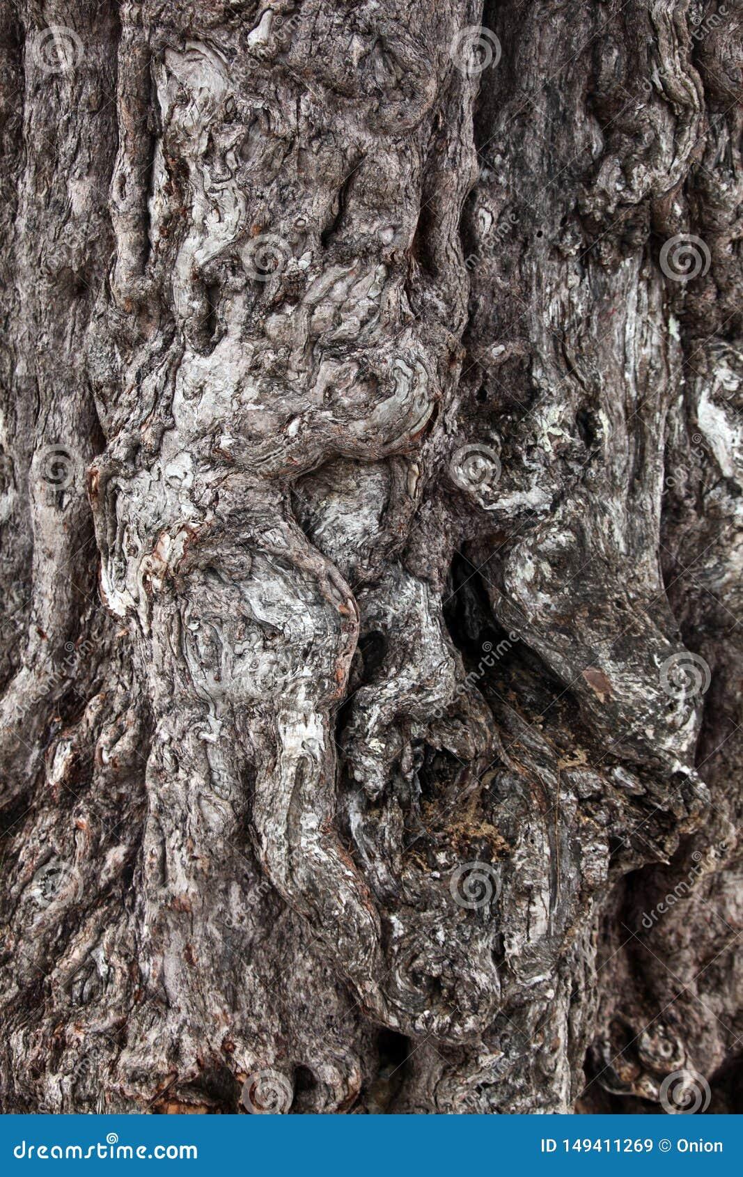 Casca de árvore de madeira incomum com testes padrões interessantes