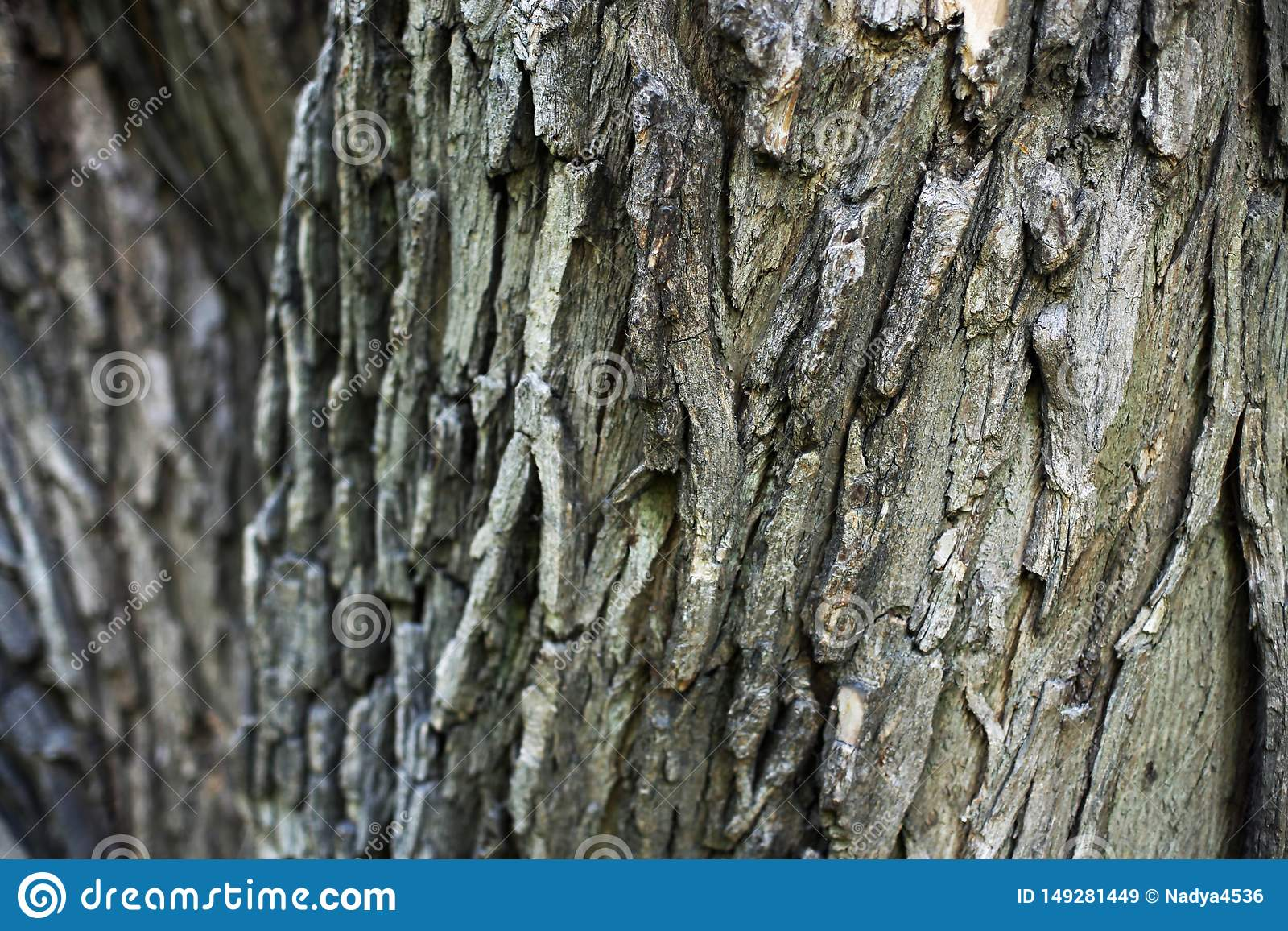 Casca de ?rvore Textured para um fundo Madeira, natural, industrial
