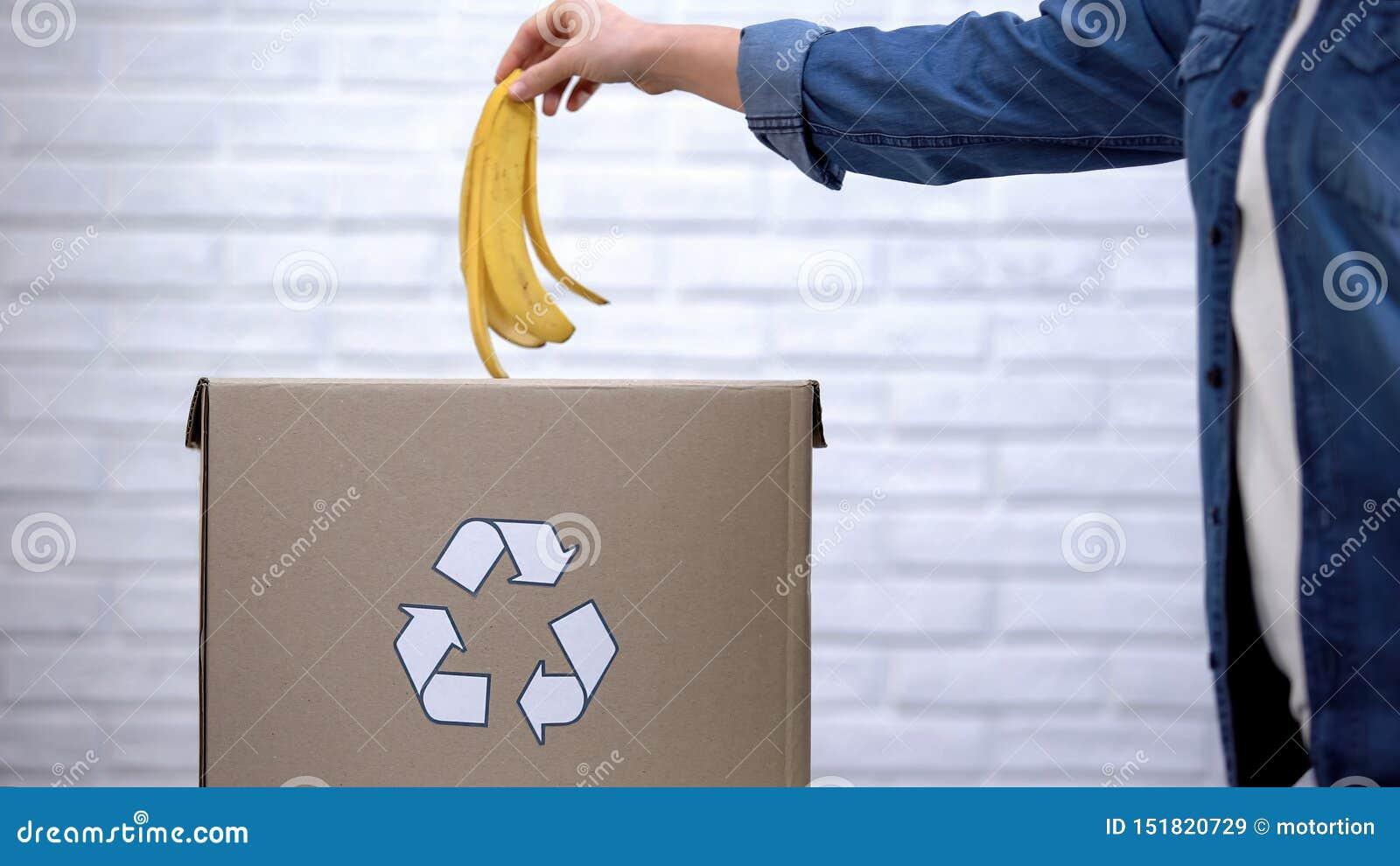 Casca de jogo da banana da pessoa no escaninho de lixo, desperdício orgânico que classifica, conscientização