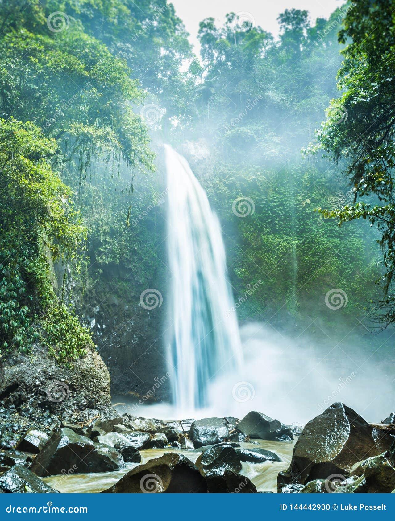 Cascada ocultada en selva tropical densa
