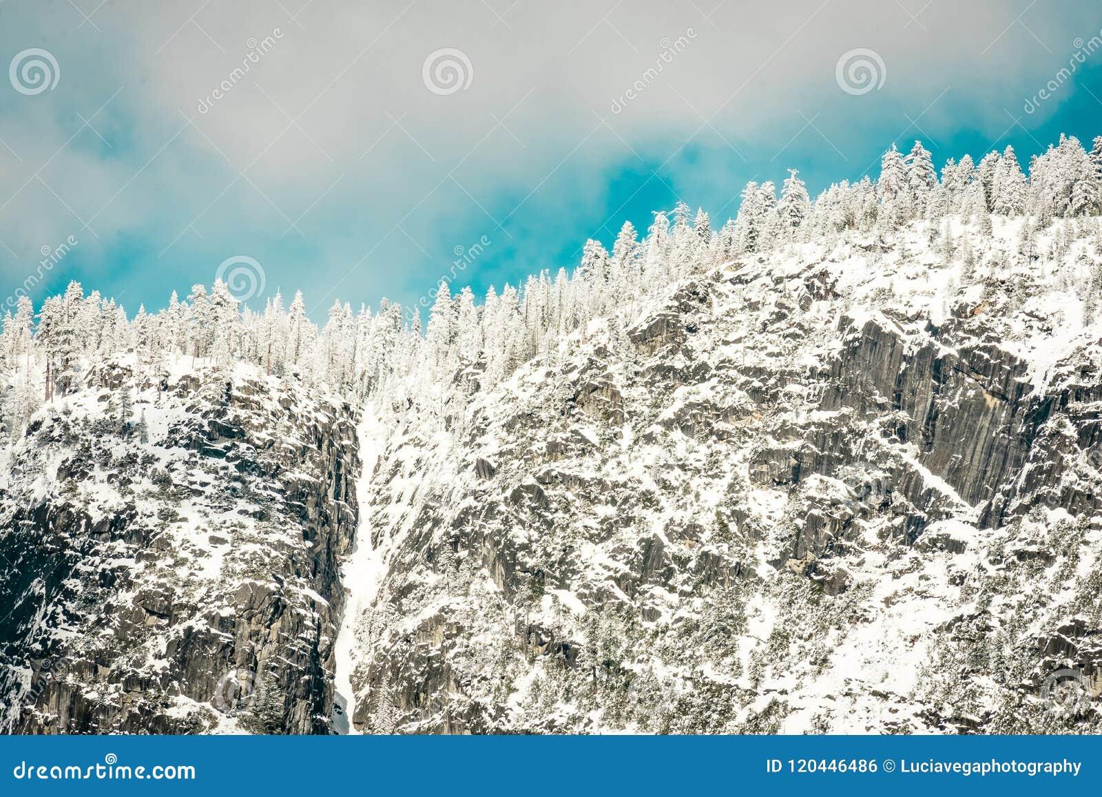 Cascada y pinos de la nieve de febrero