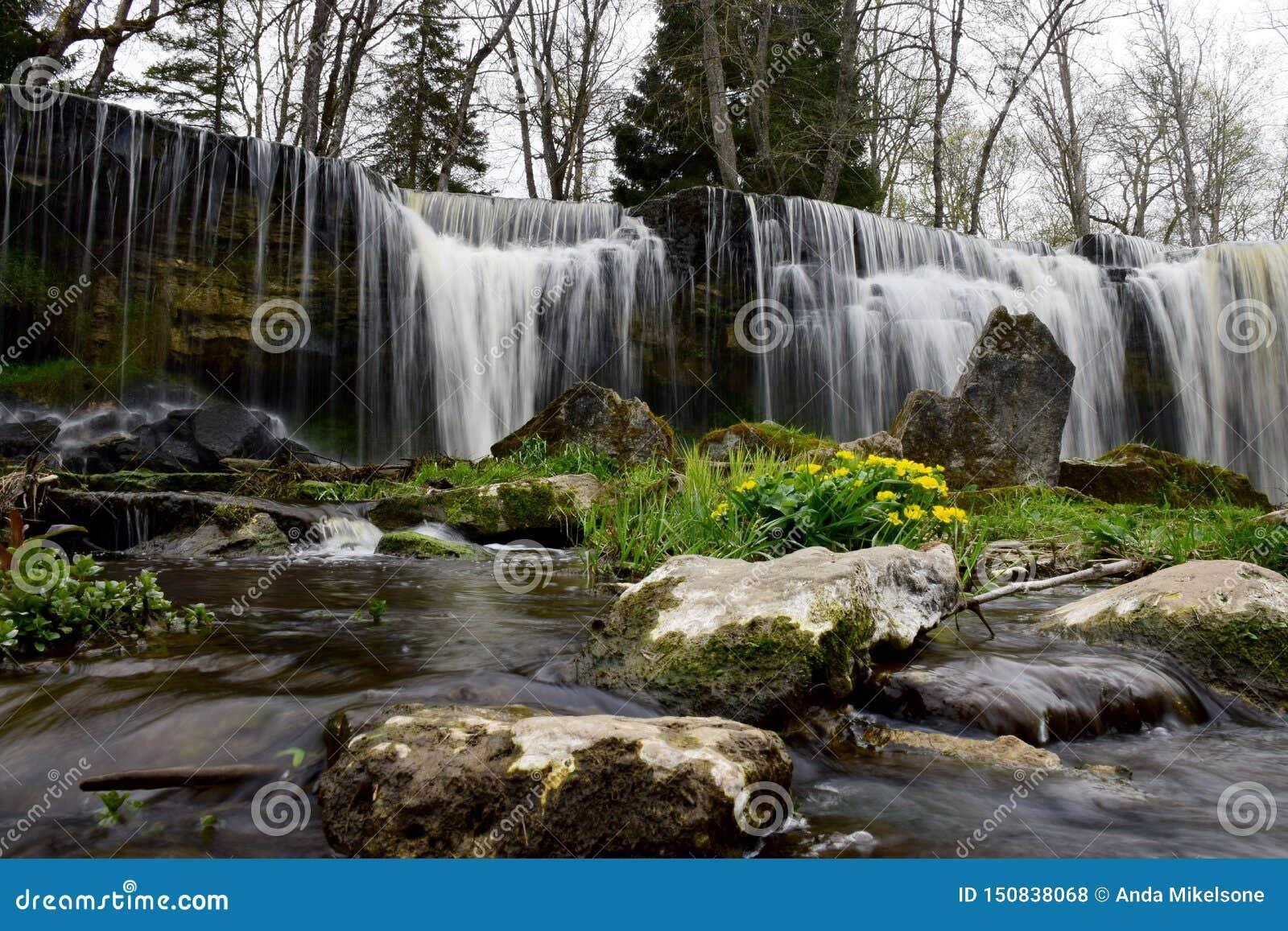 Cascade de charme avec des fleurs et des pierres de ressort