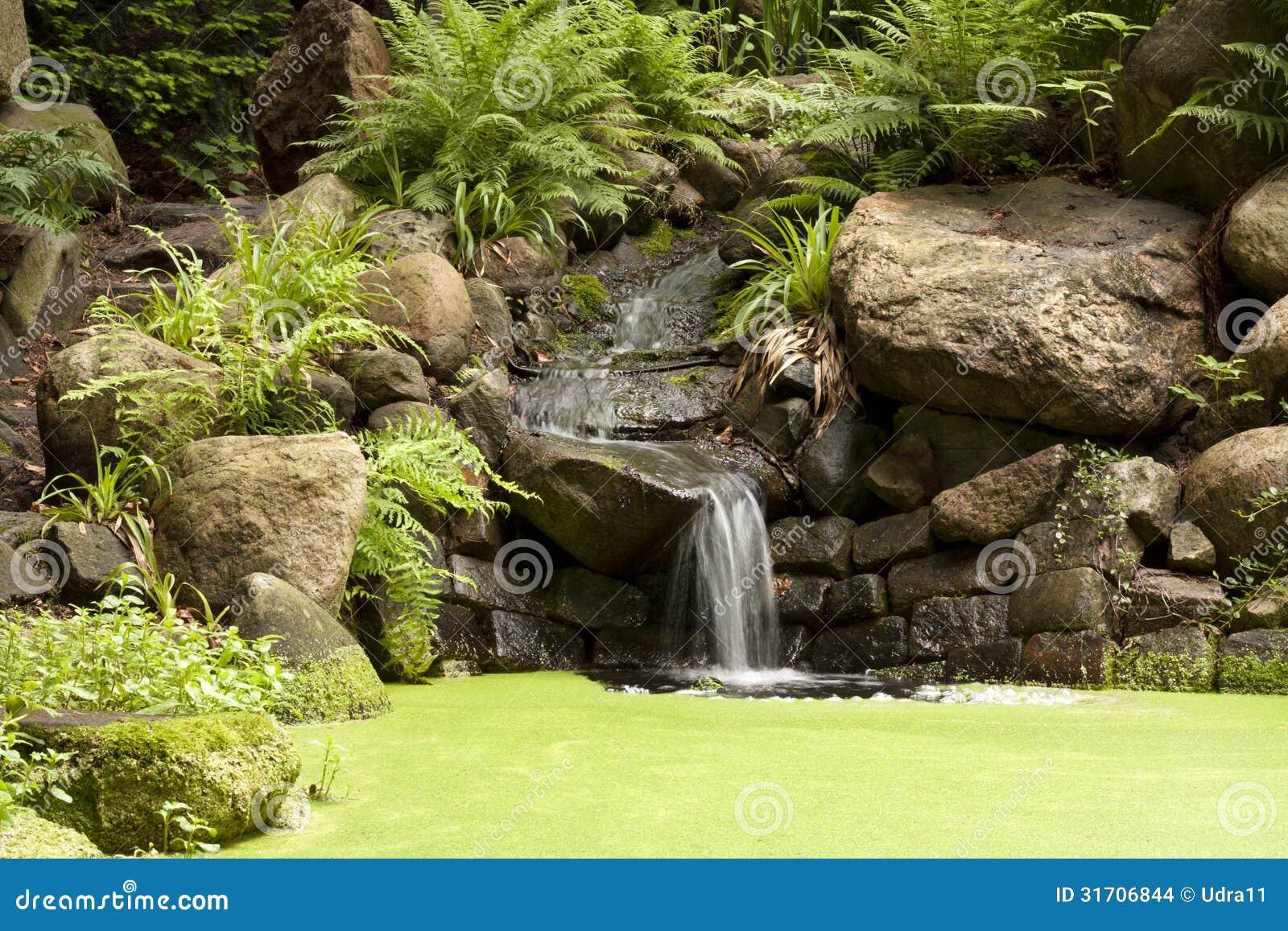 Cascade exotique dans le jardin images stock image 31706844 for Dans le jardin