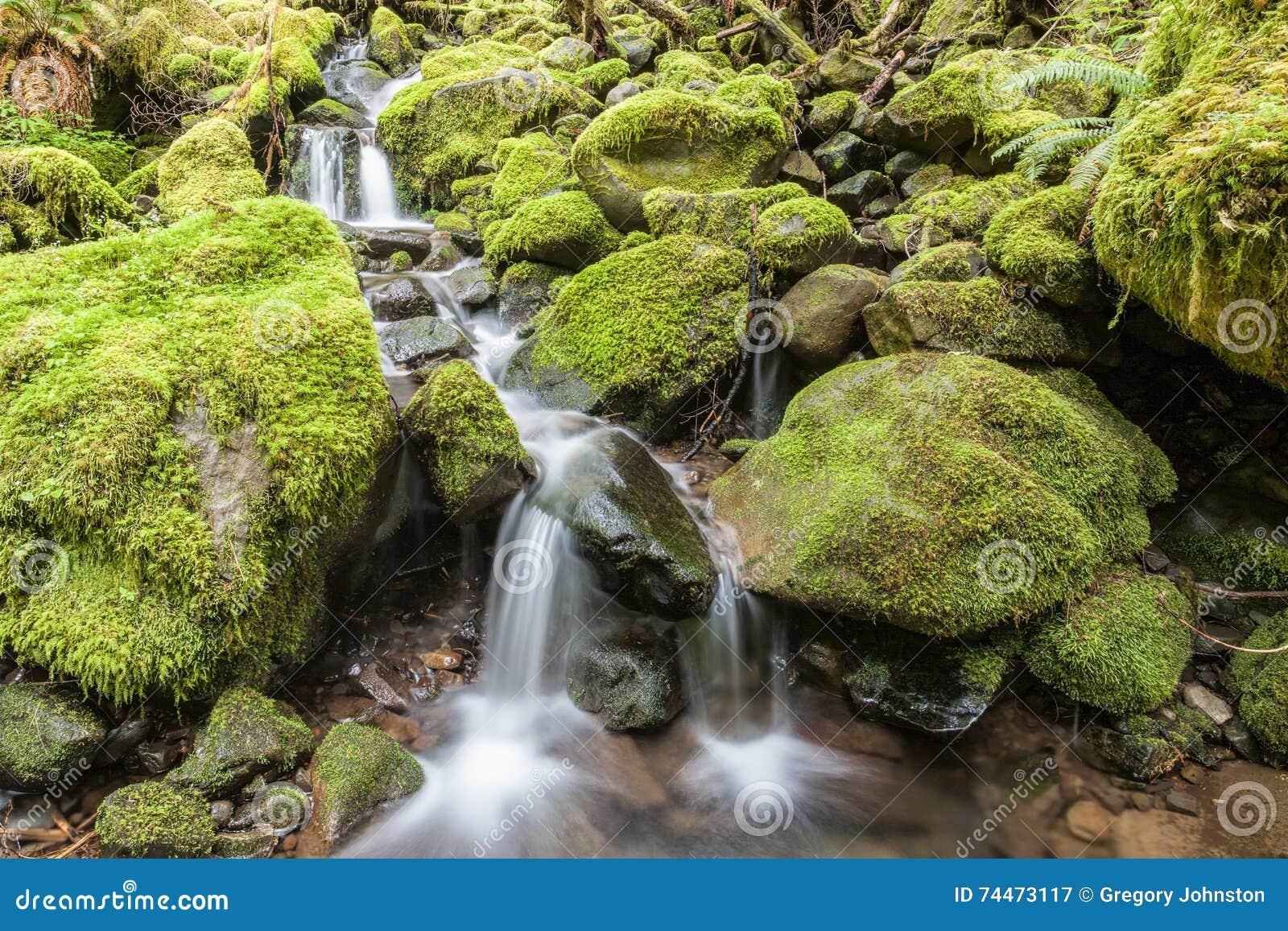 Cascades door mos behandelde rotsen