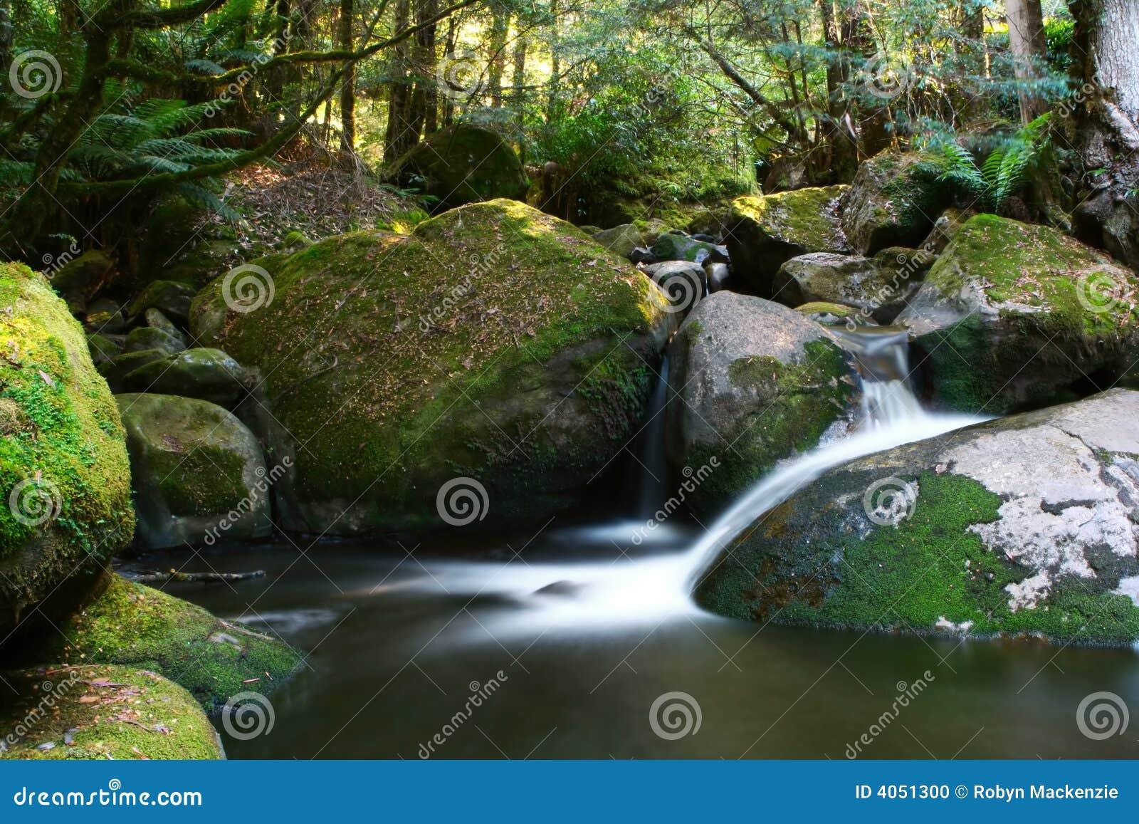 Cascata da floresta húmida
