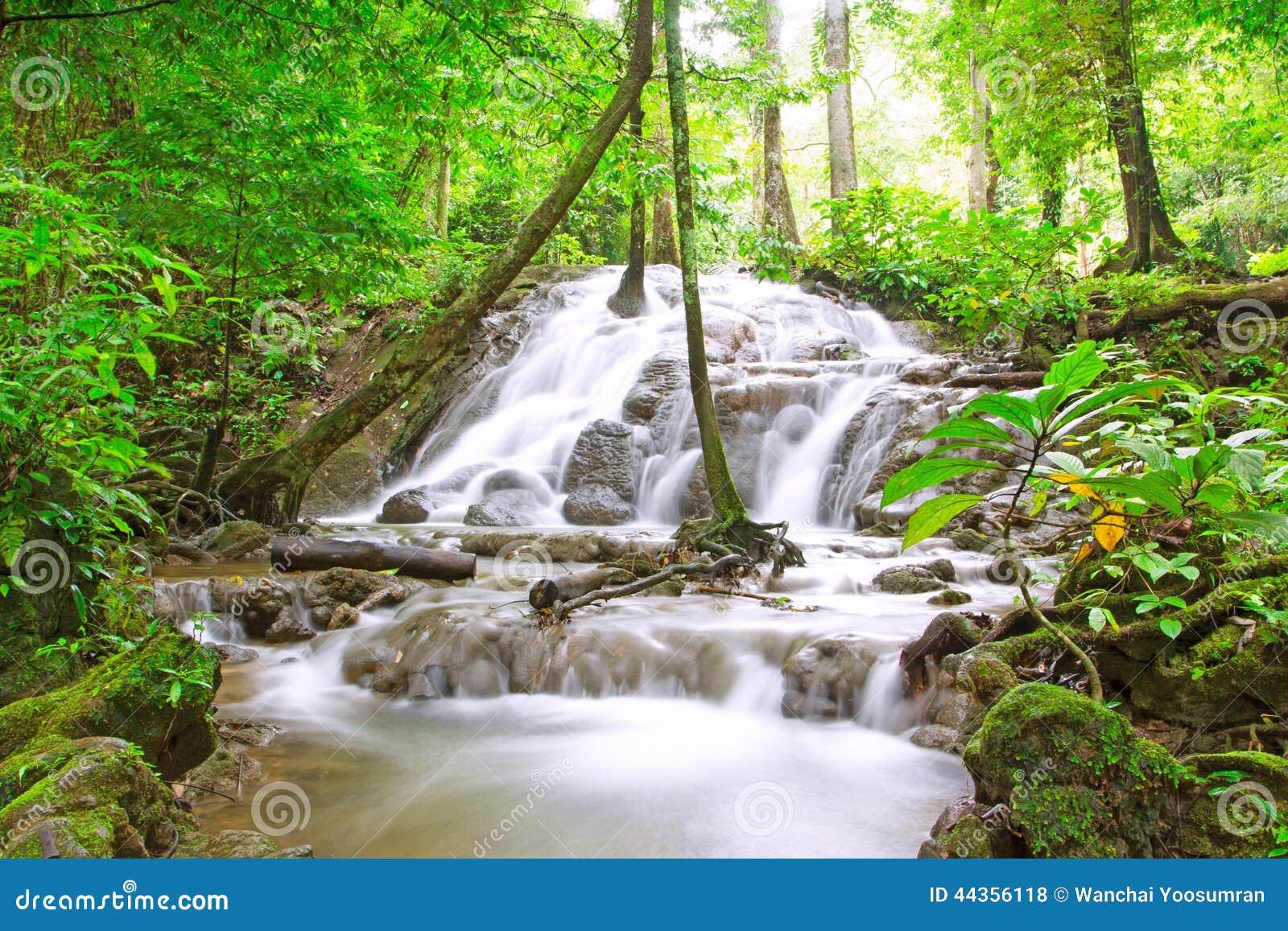 Cascata tropicale in foresta