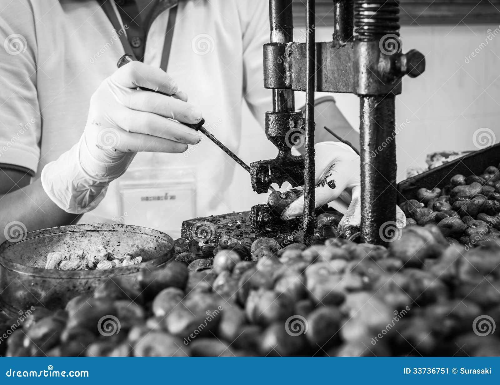 Cashew nut cracking