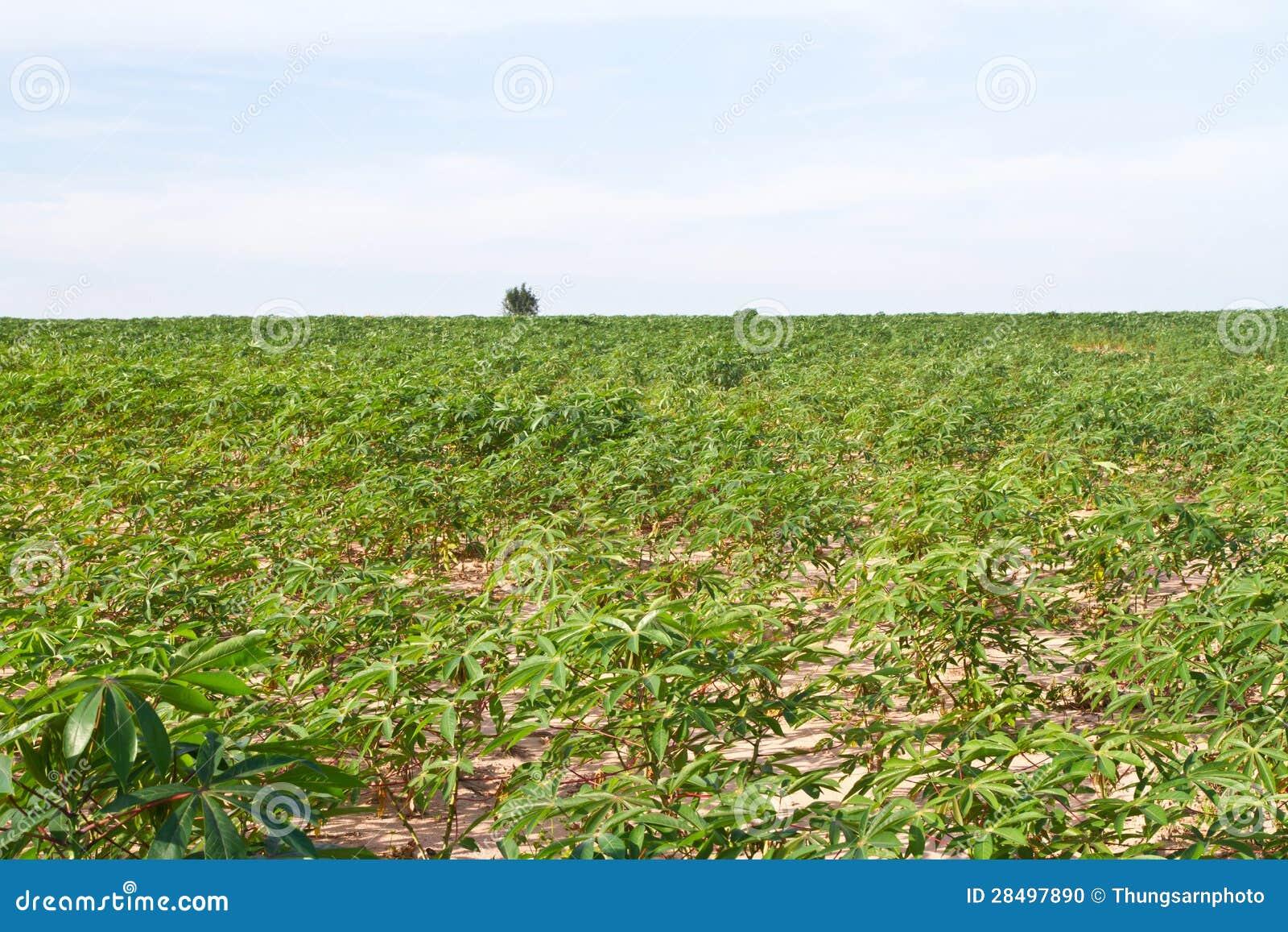 Starting a Potato Farm