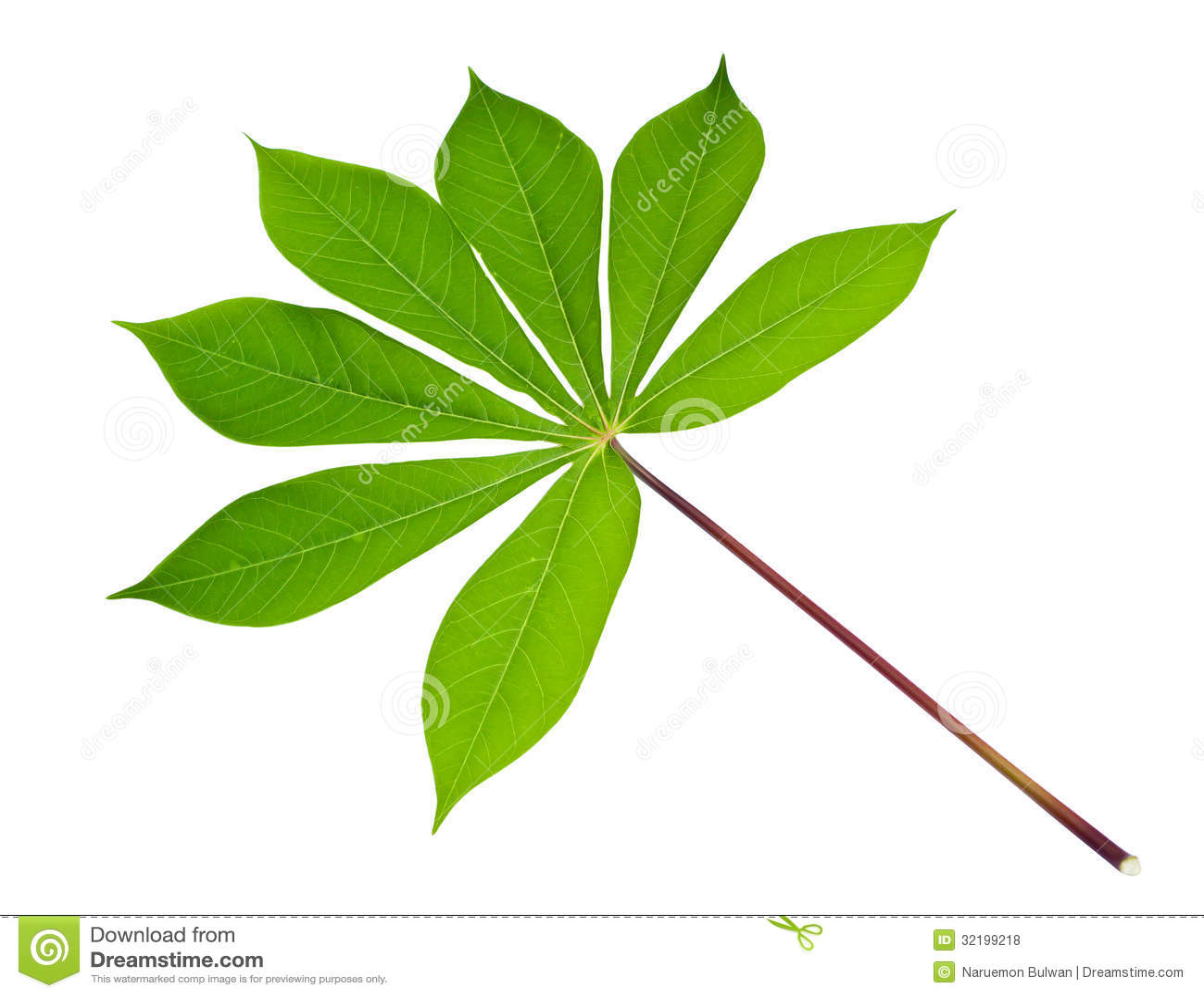 Green Frog Clipart Cassava Leaf Royalty F...