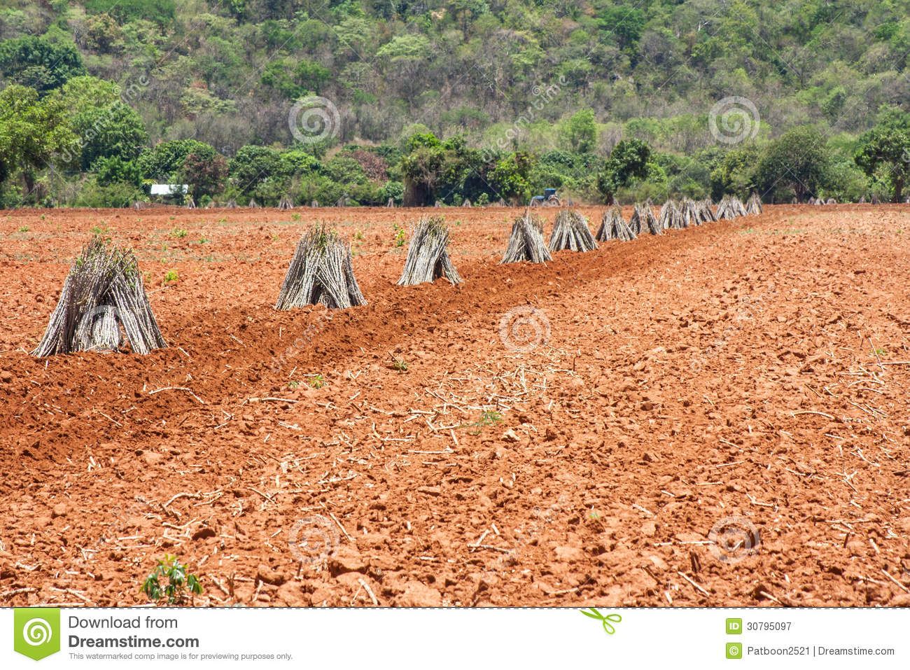 Cassava plantation business plan