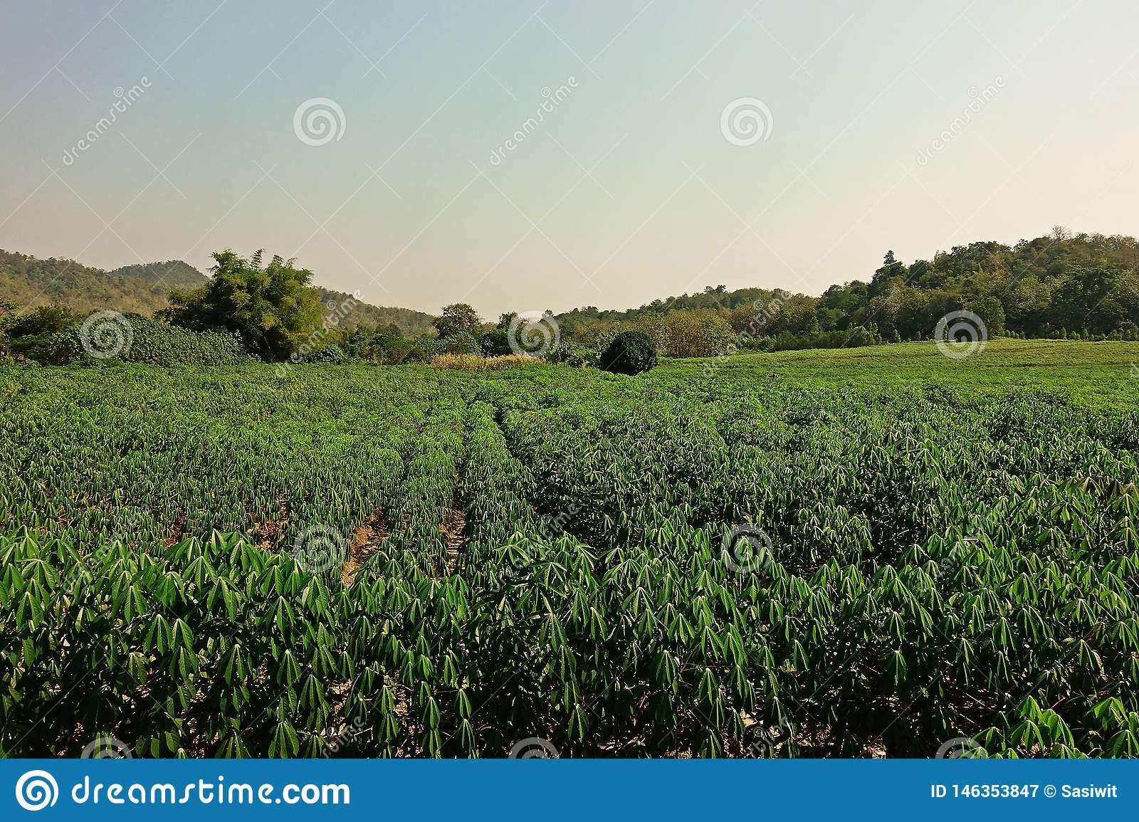 Plant industry field crops