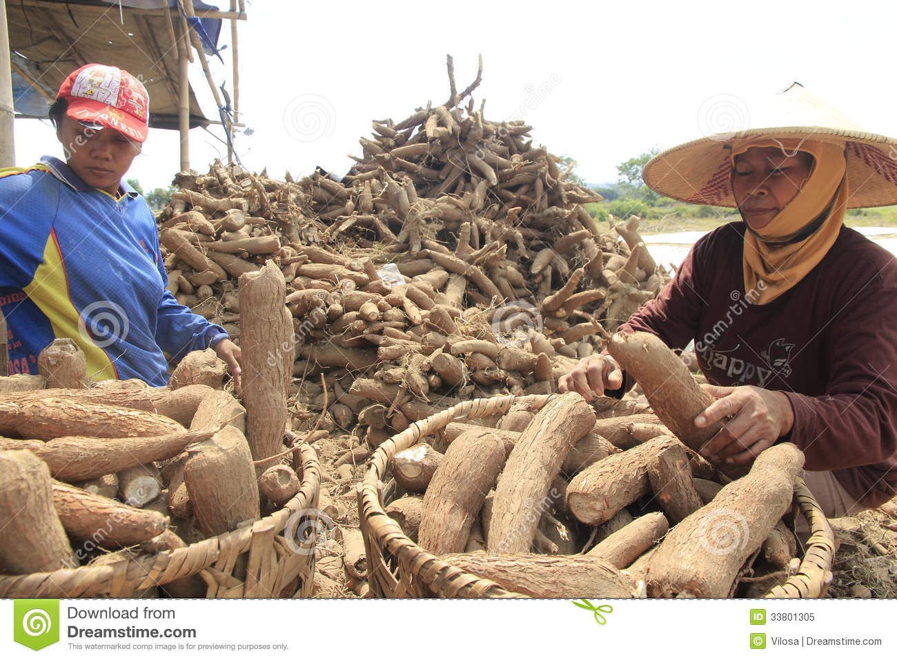 Cassava Processing editorial image  Image of cassava - 33801305