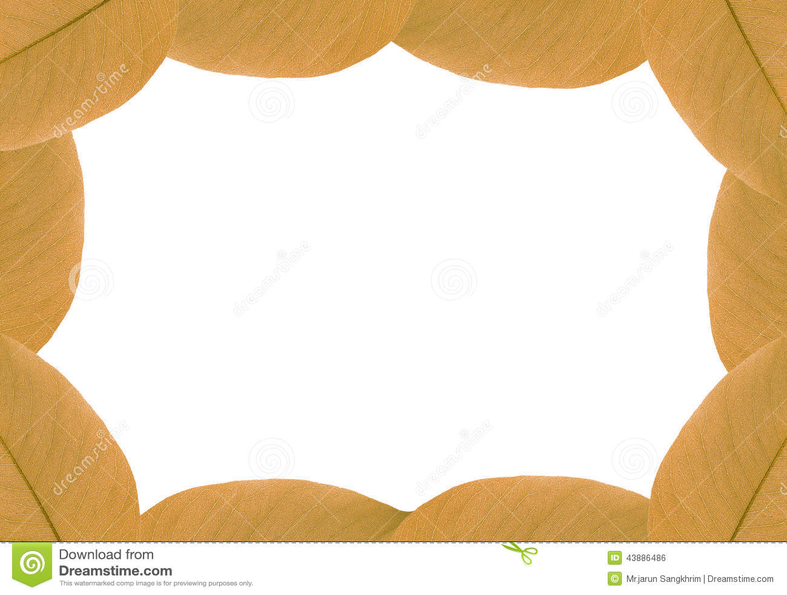cassia fistula leaf stock image cartoondealercom 43885459