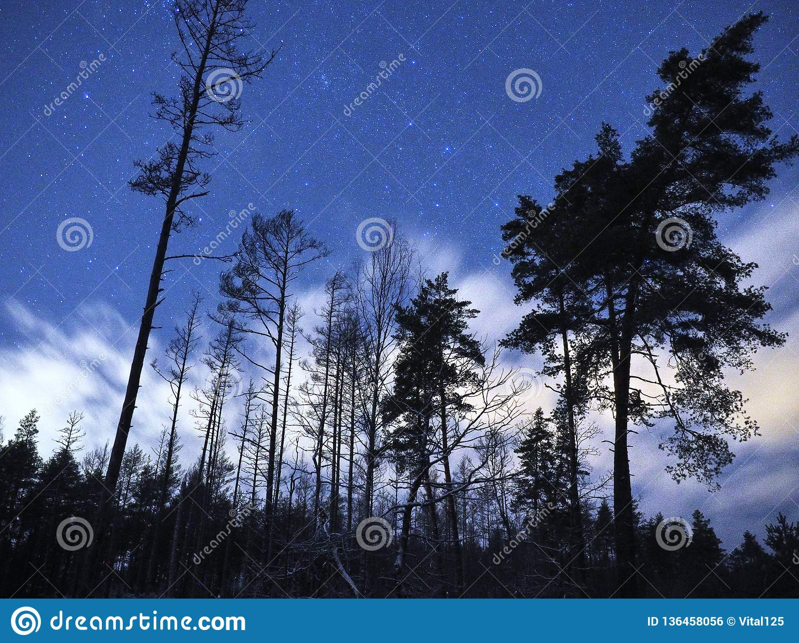 Cassiopeia constellation stars on night sky and clouds over winter forest