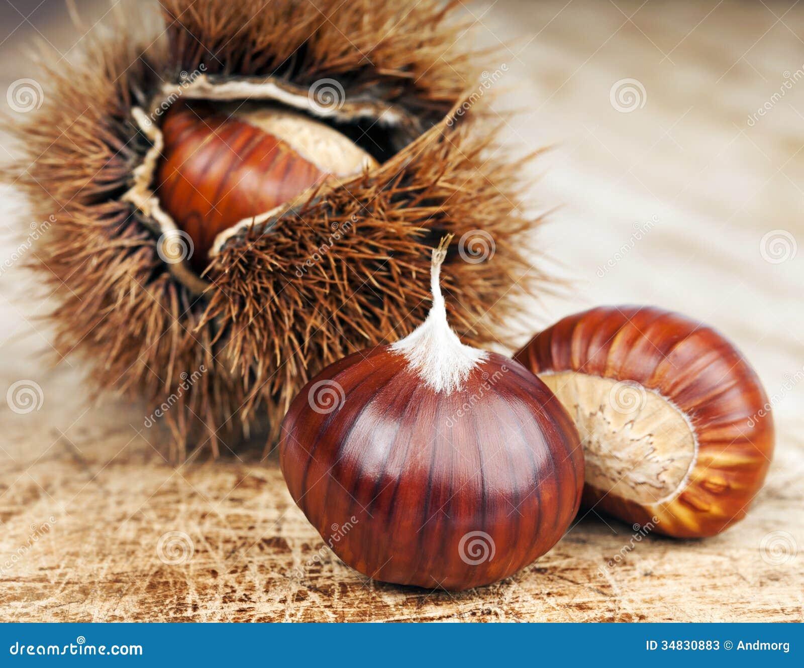 Castagne e riccio immagine stock immagine di hedgehog - Disegni di castagne ...