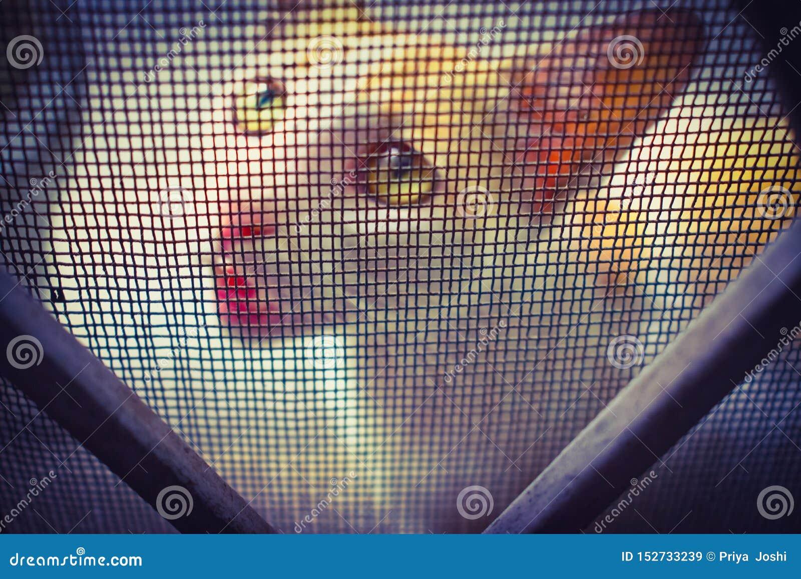 CAT С МИЛЫМ ВЫРАЖЕНИЕМ смотря через ячеистую сеть
