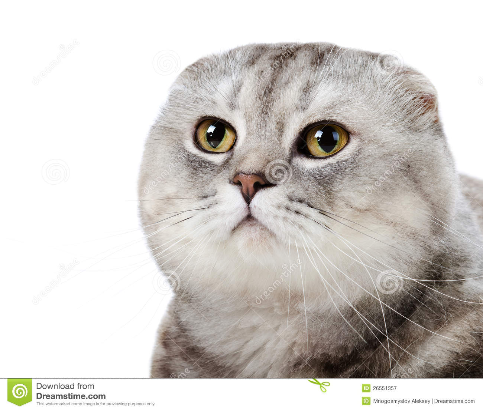 halfe pers kitten