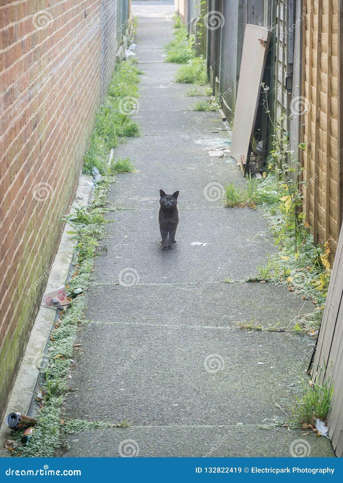 Alley Cat, Hampden Park, East Sussex, UK
