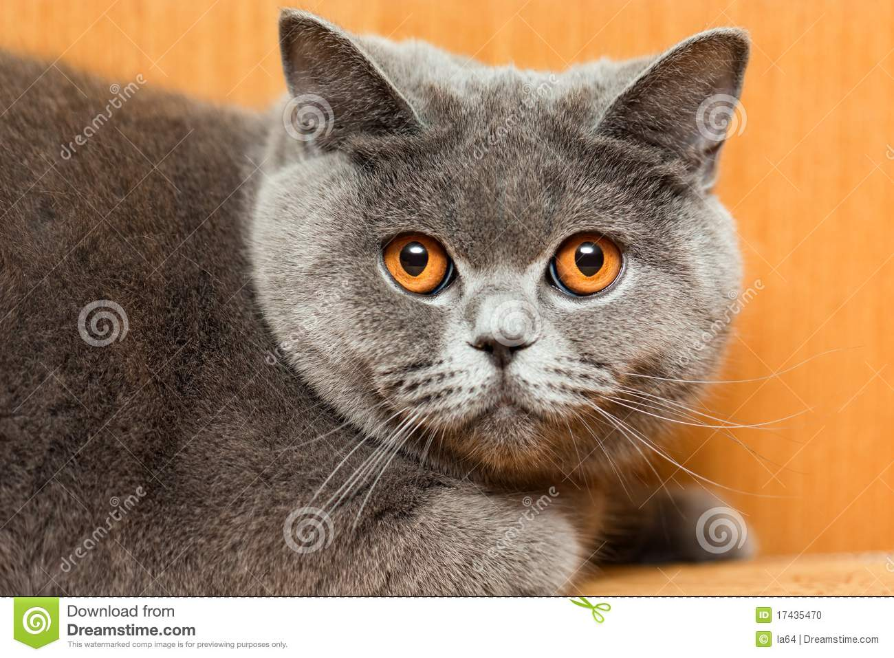 Cat Animal Stock Photo Image 17435470