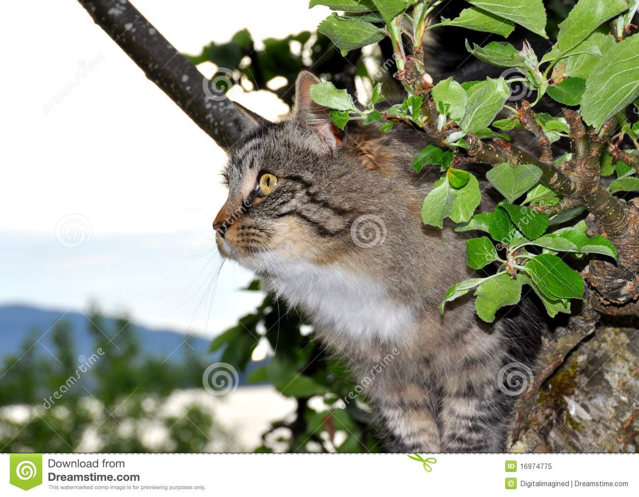 cat in apple tree stock image image of branch climbing 16974775. Black Bedroom Furniture Sets. Home Design Ideas