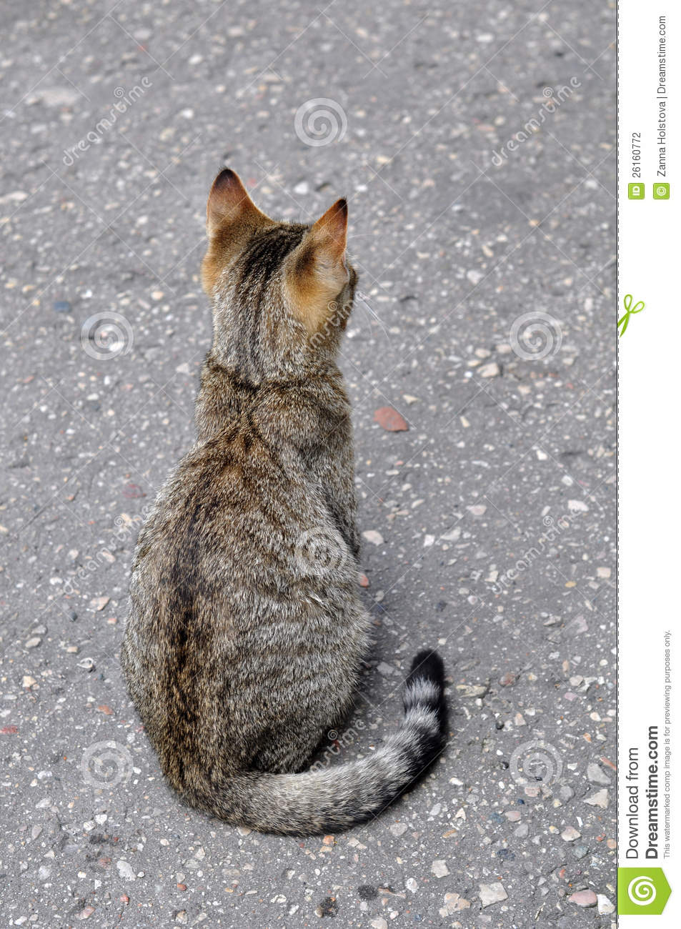 Cat Back Stock Photo Image Of Color Wool Gray Graceful