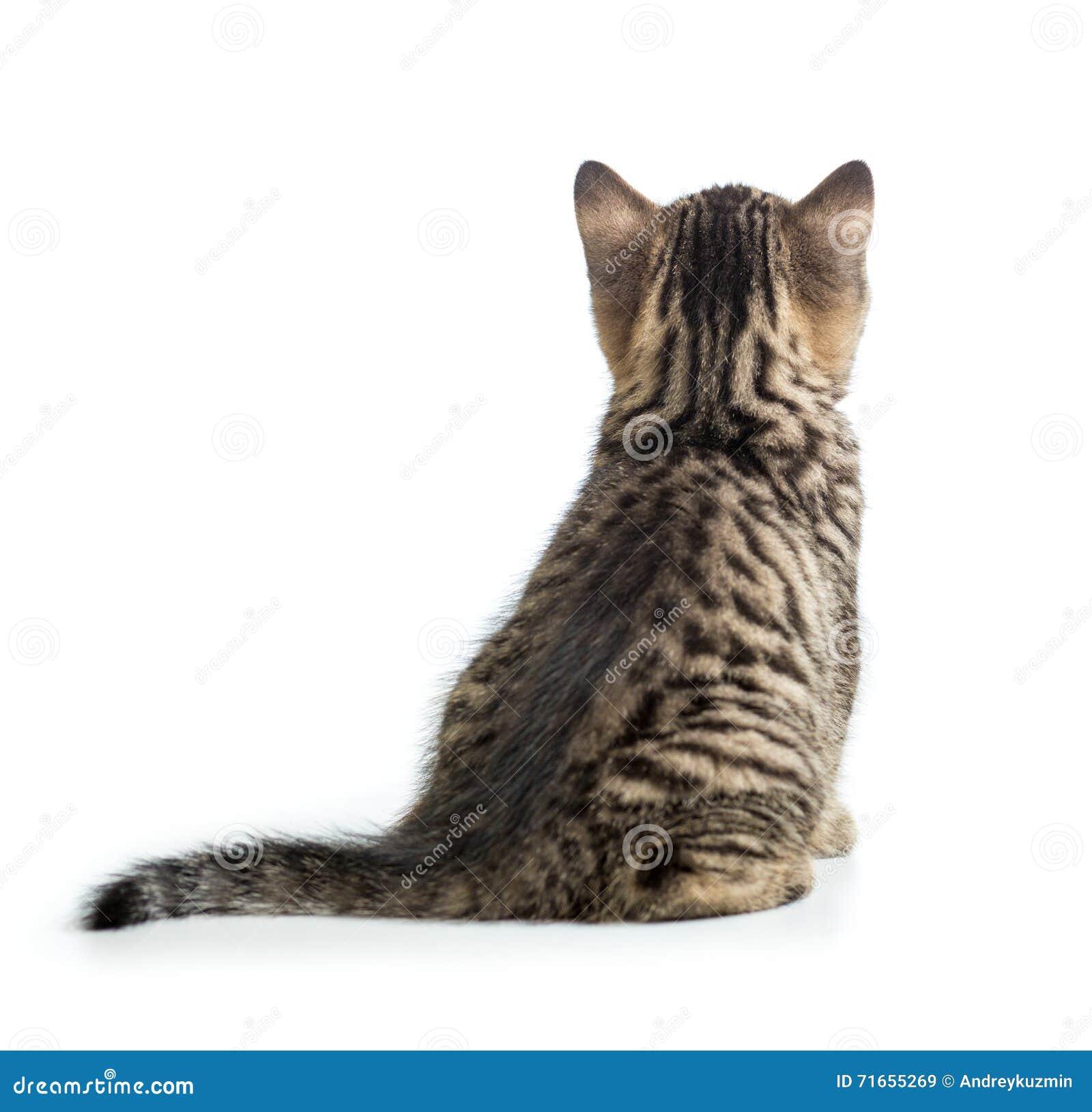 cat sitting by a back cartoon vector cartoondealer com