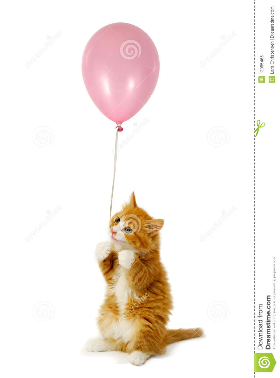 Cat And Balloon Royalty Free Stock Photo Image 13985465