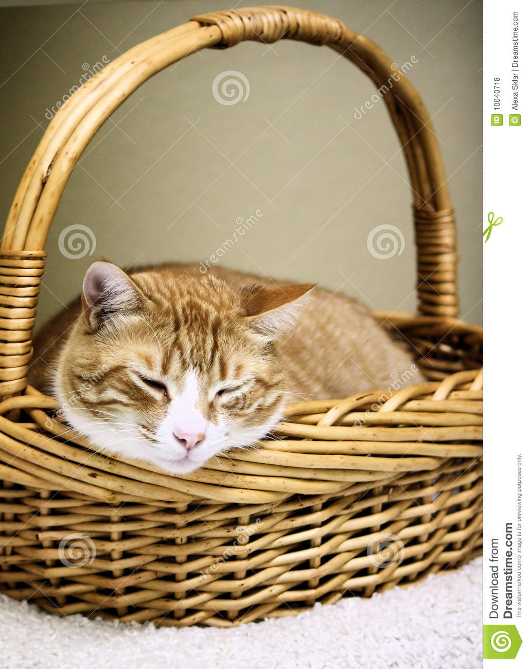 Cat Basket Clipart : Cat in a basket royalty free stock photos image