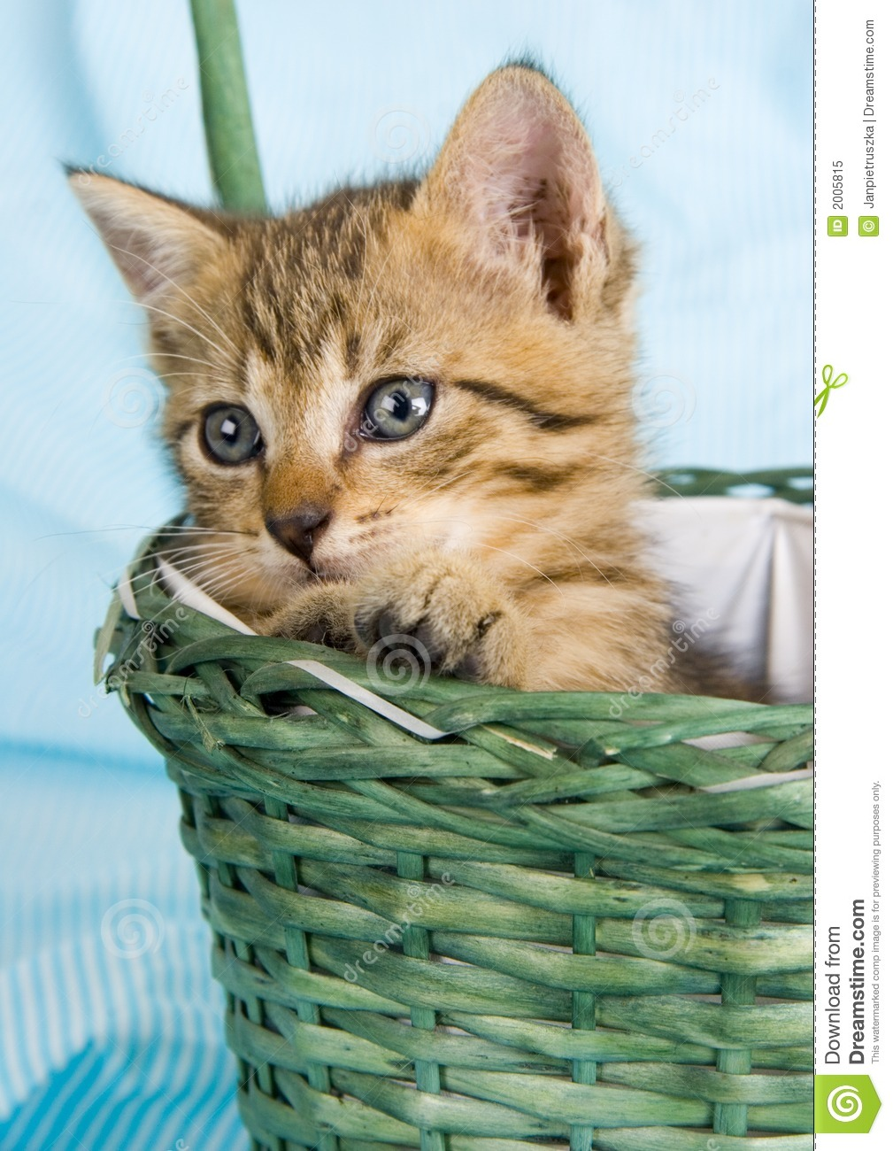 Cat In The Basket Stock Image. Image Of Mammals, Claws