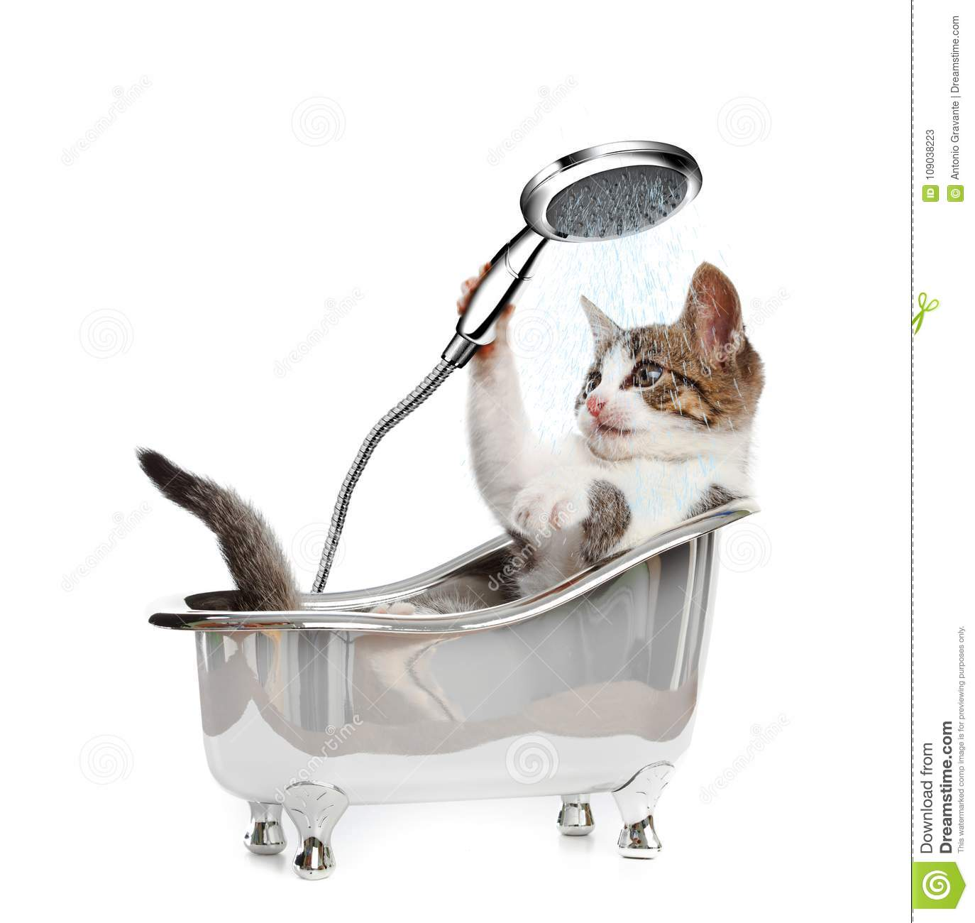 Cat in a bathtube with the shower