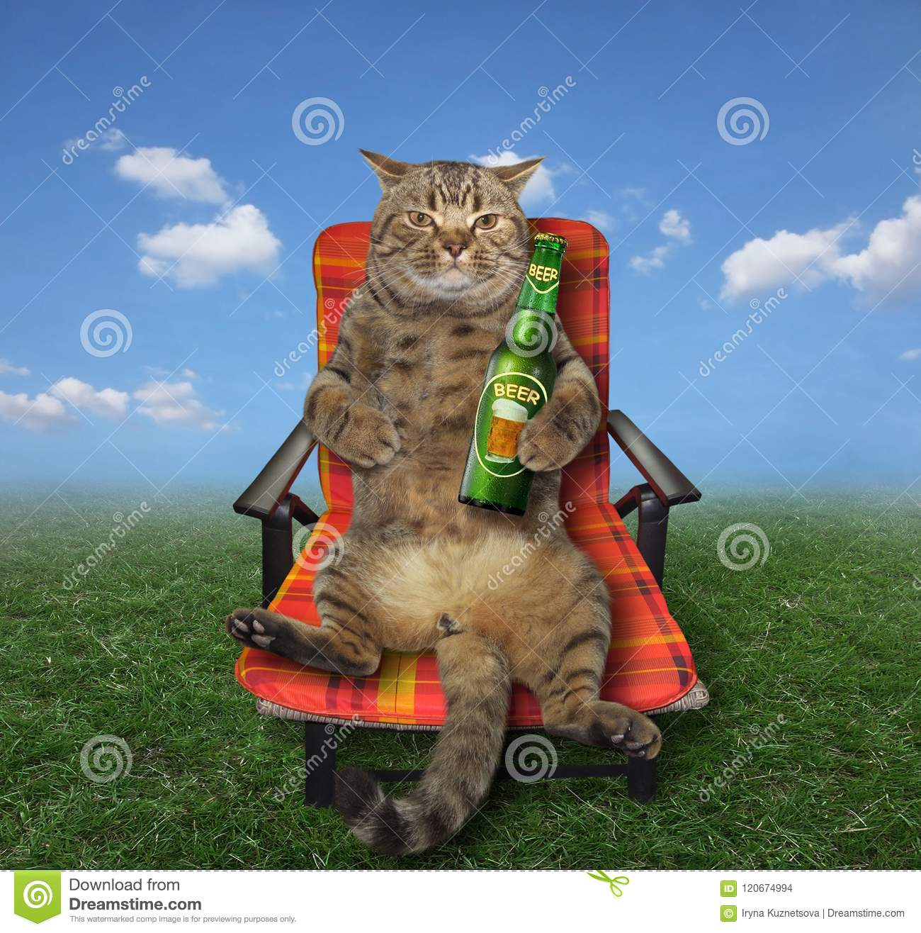 Cat with beer on meadow