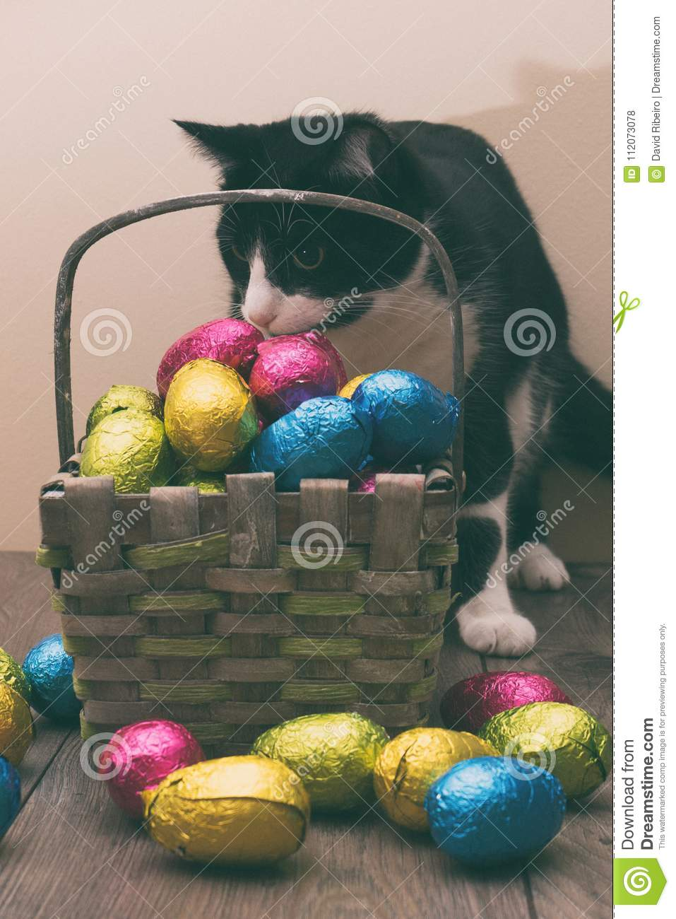 Cat behind a straw basket filled with Easter chocolate eggs wrapped in colorful tinfoil