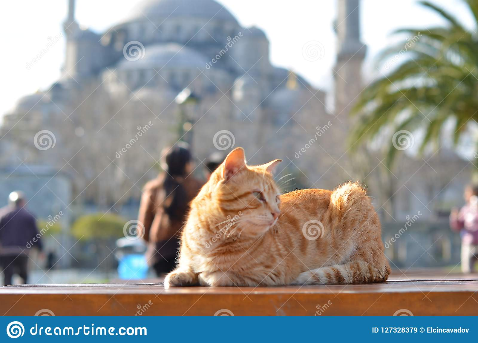 Cat behind of Sultanahmet