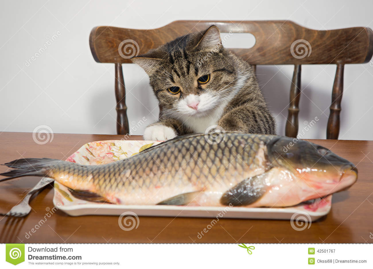 Cat and a big fish stock image. Image of tabby, fish ... Tabby Cat Sitting Up