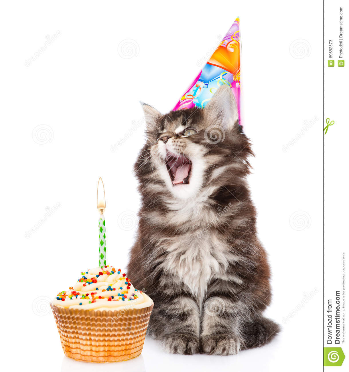 Cat In Birthday Hat Blows Out The Candles On Cake Isolated White