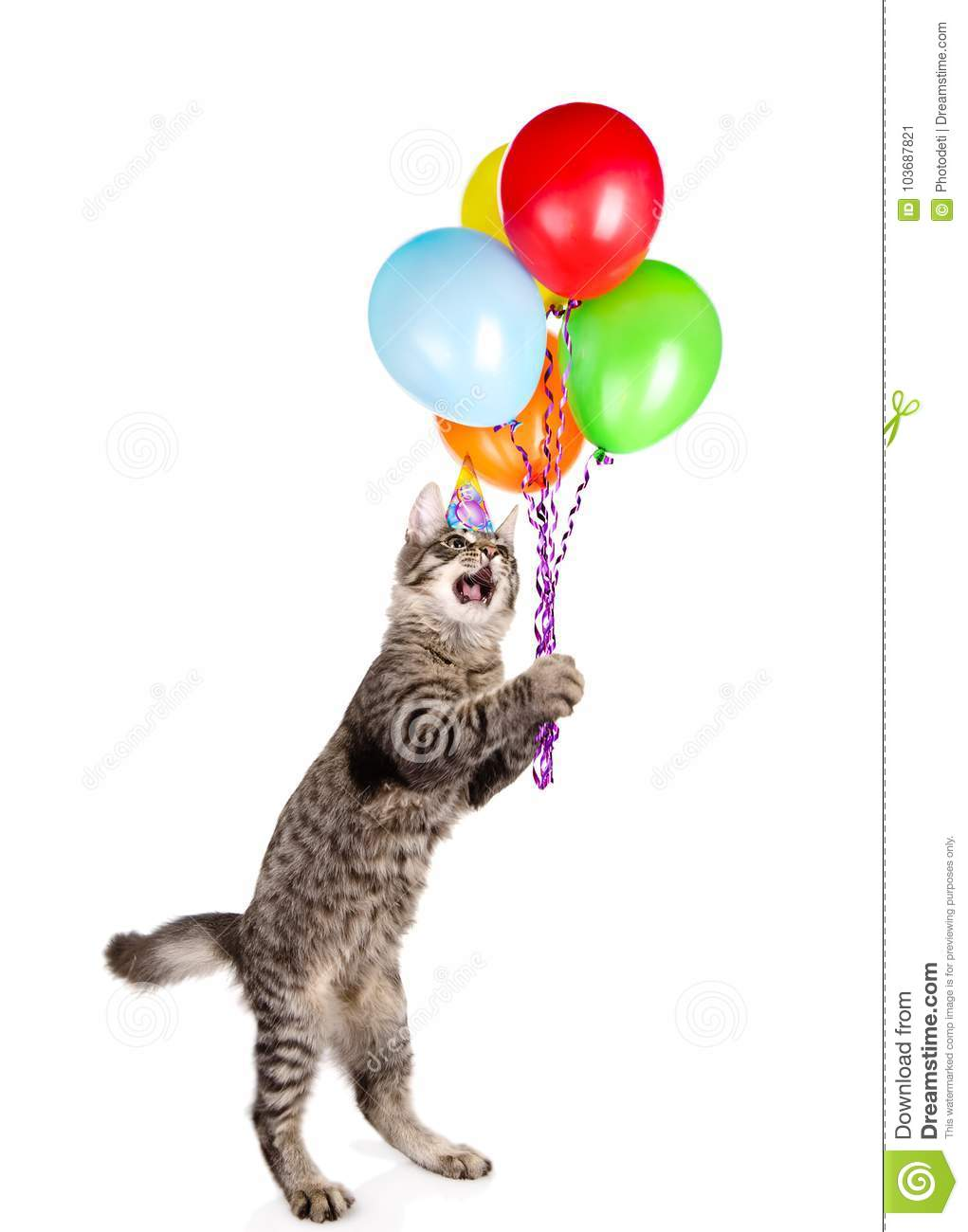 Cat In Birthday Hat Holding Balloons Isolated On White Background