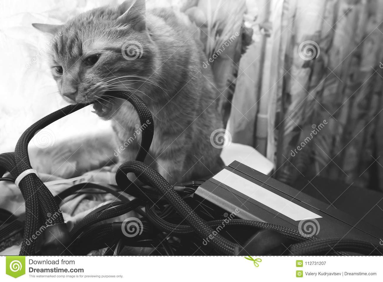 Cat Bite the Wires stock image. Image of cats, profit - 112731207