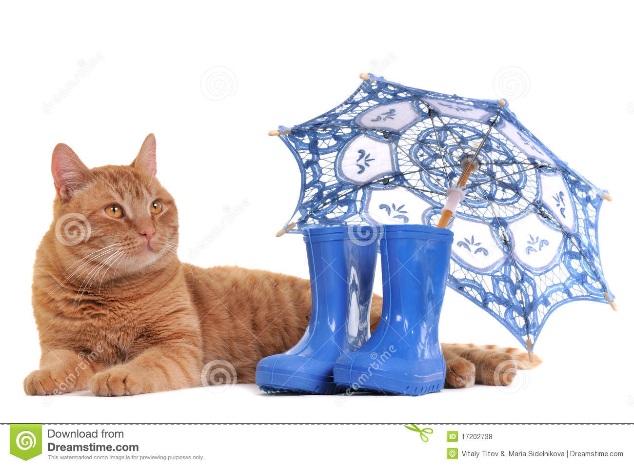 Cat with Boots and Umbrella