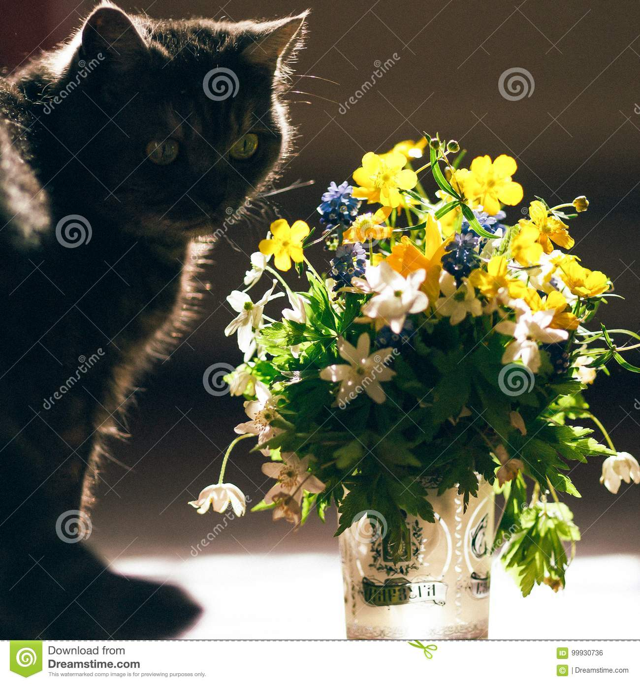 The Cat And The Bouquet Of Flowers Stock Photo Image Of White