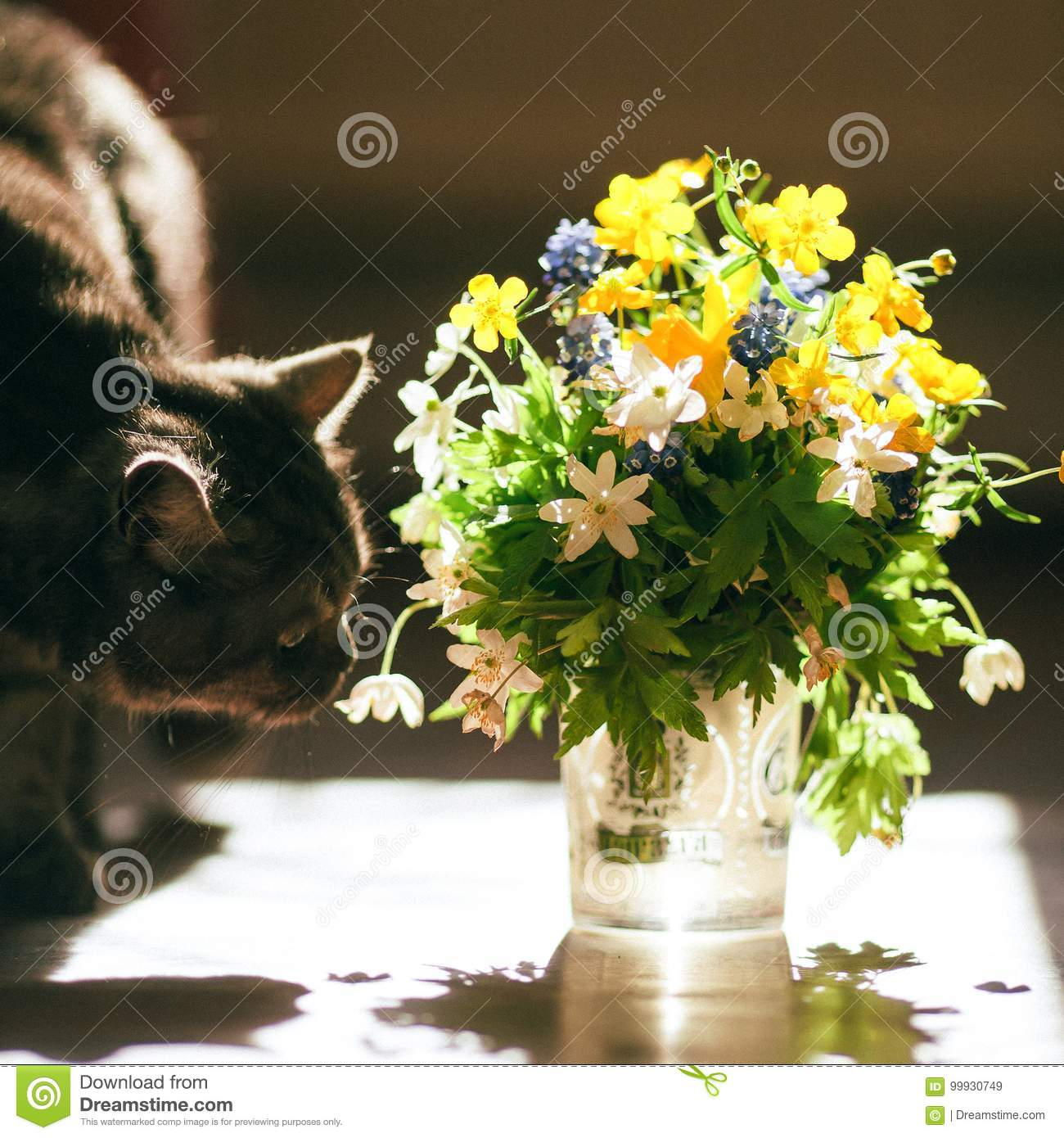 The Cat And The Bouquet Of Flowers Stock Image Image Of Flower