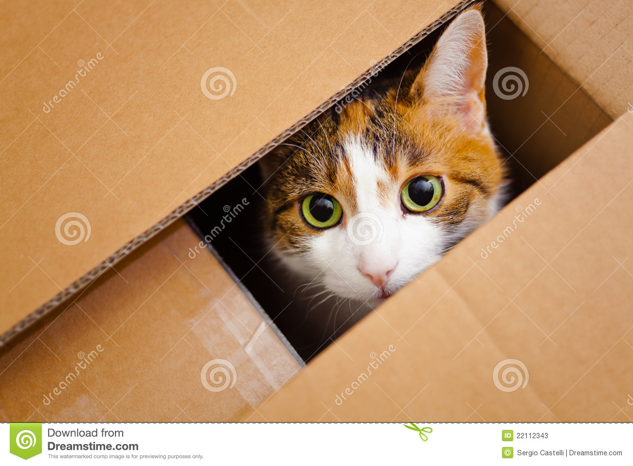 cat in a box stock photos image 22112343. Black Bedroom Furniture Sets. Home Design Ideas