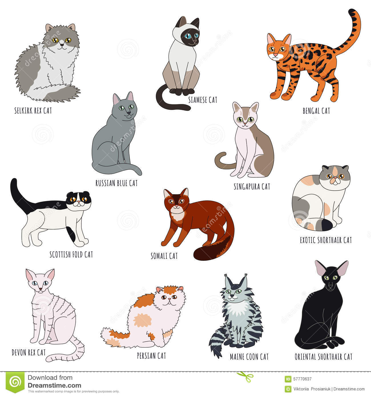 Names Of Cats And Dogs Cunt
