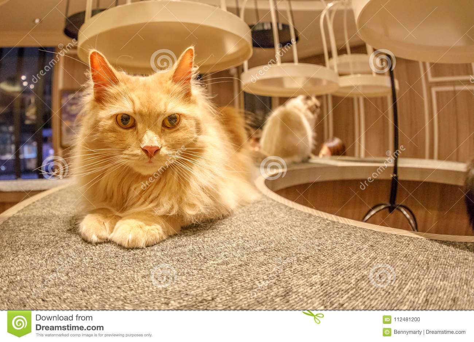 Cat Cafe Mocha Foto De Archivo Imagen De Mocha Cafe 112481200