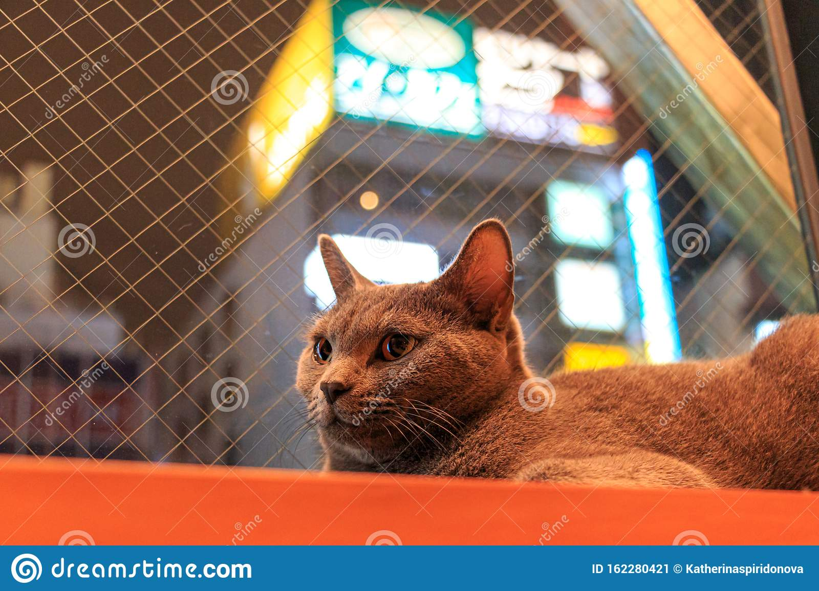 Cat Cafe In Tokyo Japan Stock Image Image Of Cute 162280421